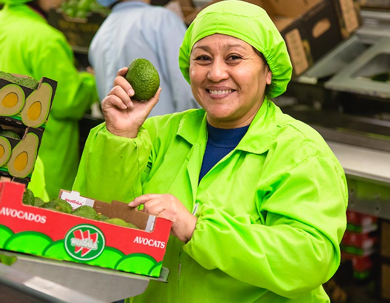 The first Peruvian avocado container is arriving to Shanghai today